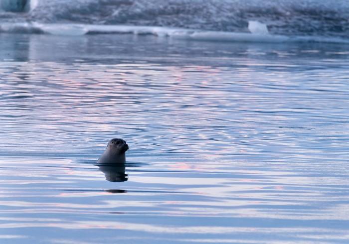 Island Robbe