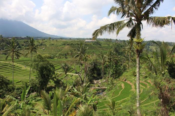 Rice Field Jatiluwih